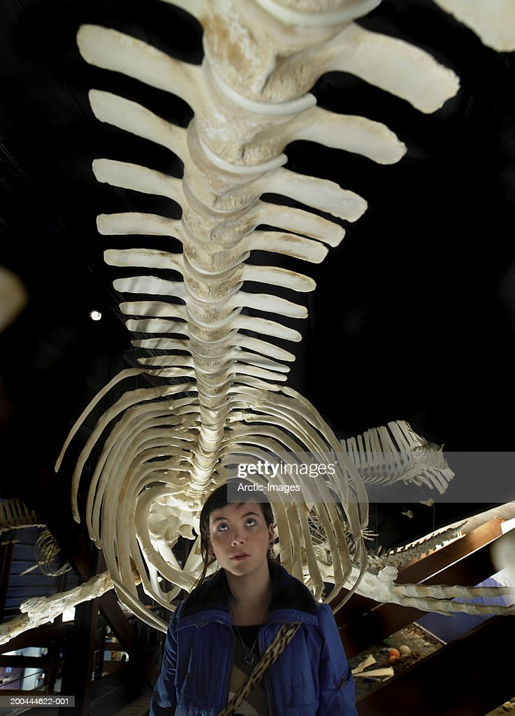 Young woman under humpback whale skeleton, close up : Stockfoto