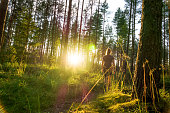 Young woman walking in forest path at sunset. Summer night in nature at dawn.