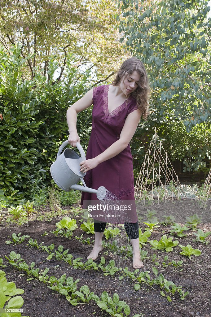 Young woman waters vegetable patch : Stock Photo