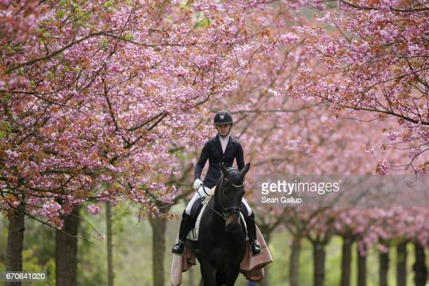 A young woman who said she did not mind being photographed rides a horse among blossoming cherry trees on April 20 2017 in Berlin Germany Farmers are...