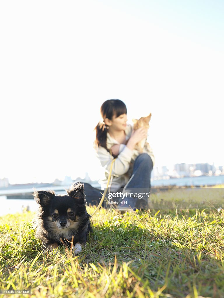 Young woman with two dogs in park (focus on dog lying in foreground) : Stock Photo