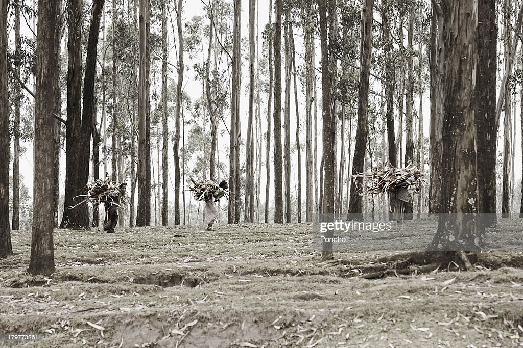 young women carrying wood : Stock Photo