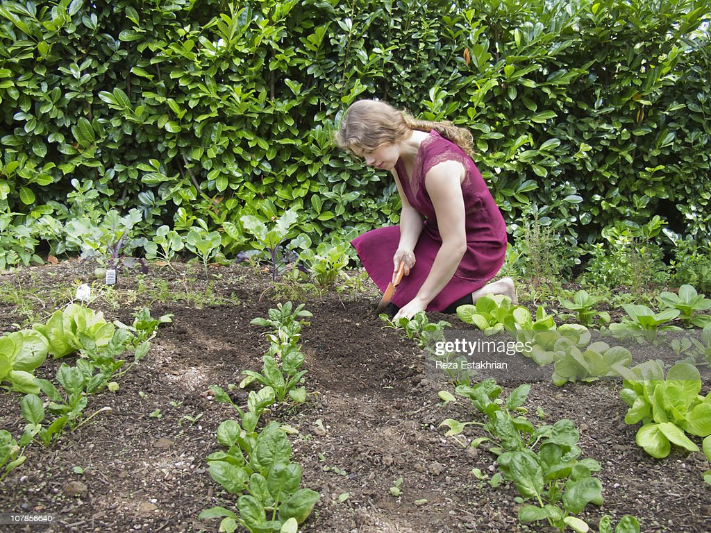 Young women weeds vegetable garden : Stock Photo