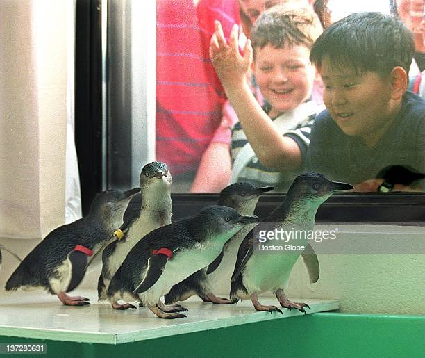 Youngsters view five of the seven blue penguins new arrivals at the New England Aquarium Penguins who are originally from Australia are the size of a...
