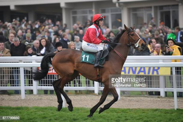 Your Busy ridden by Ms K Walsh going to post for the Fulke Walwyn Kim Muir Challenge Cup Handicap Chase on St Patrick's Thursday during Cheltenham...
