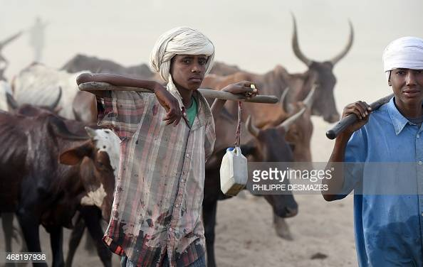 Youth herd cattle close to the village of Guite in Chad's lake region north of the capital NDjamena on March 30 2015 AFP PHOTO/PHILIPPE DESMAZES