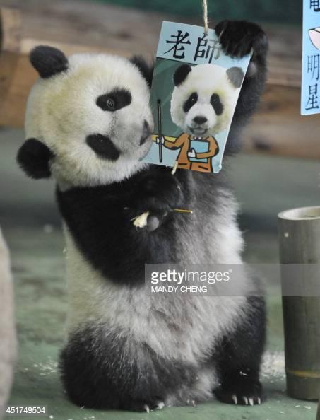 Panda bite - photo#24
