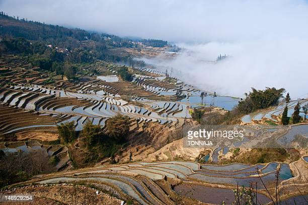 Yuanyang rice terrace