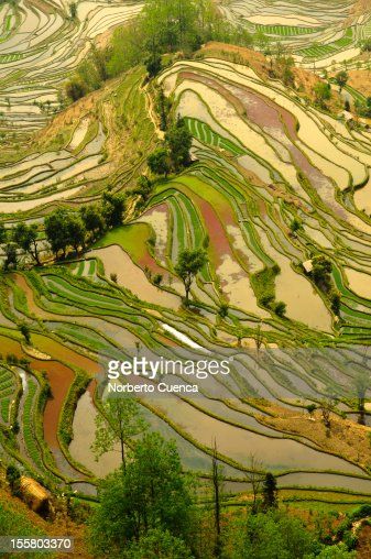 Yuanyang Rice terraces.