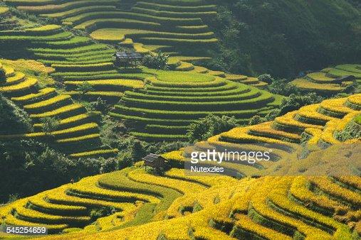Yuanyang Rice Terraces