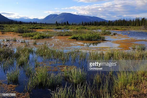 Yukon Wetland
