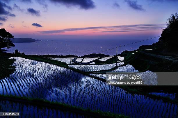 Yuya rice terrace
