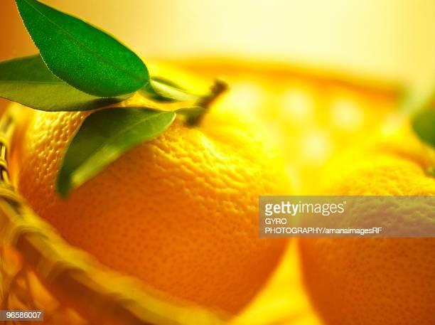Yuzu Citrus Fruit