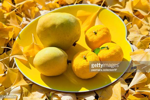 Yuzu Fruits, Chinese Quice and Ginkgo Tree