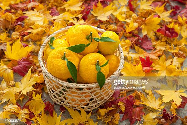 Yuzu Fruits in Basket