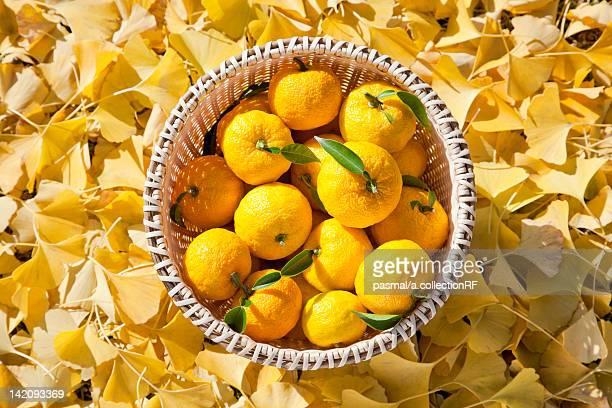 Yuzu Fruits in Bowl