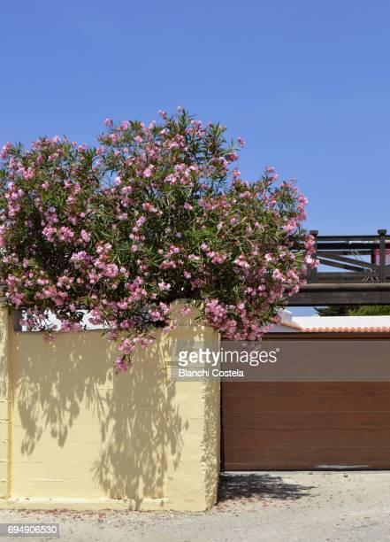 Zahora in Cadiz in spring