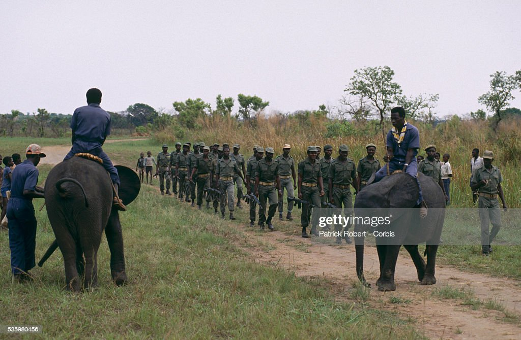 Zairean soldiers march past elephant trainers who are riding young African elephants in Virunga National Park. The animals are part of a training experiment in the park.