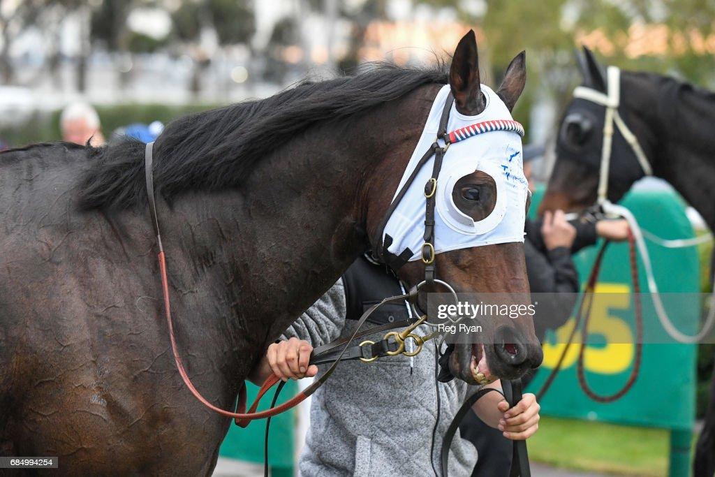 Zamboanga wins the Rip Curl BM58 Handicap at Geelong Racecourse on May 19, 2017 in Geelong, Australia.