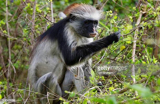 Primatologists directory search