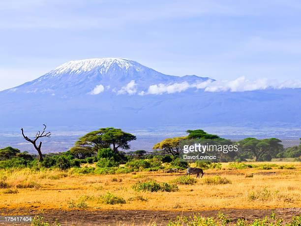 Zebra and Kilimanjaro