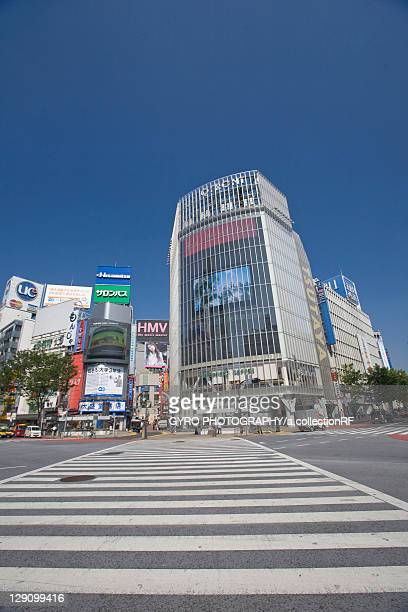 Zebra Crossing at Shibuya Station