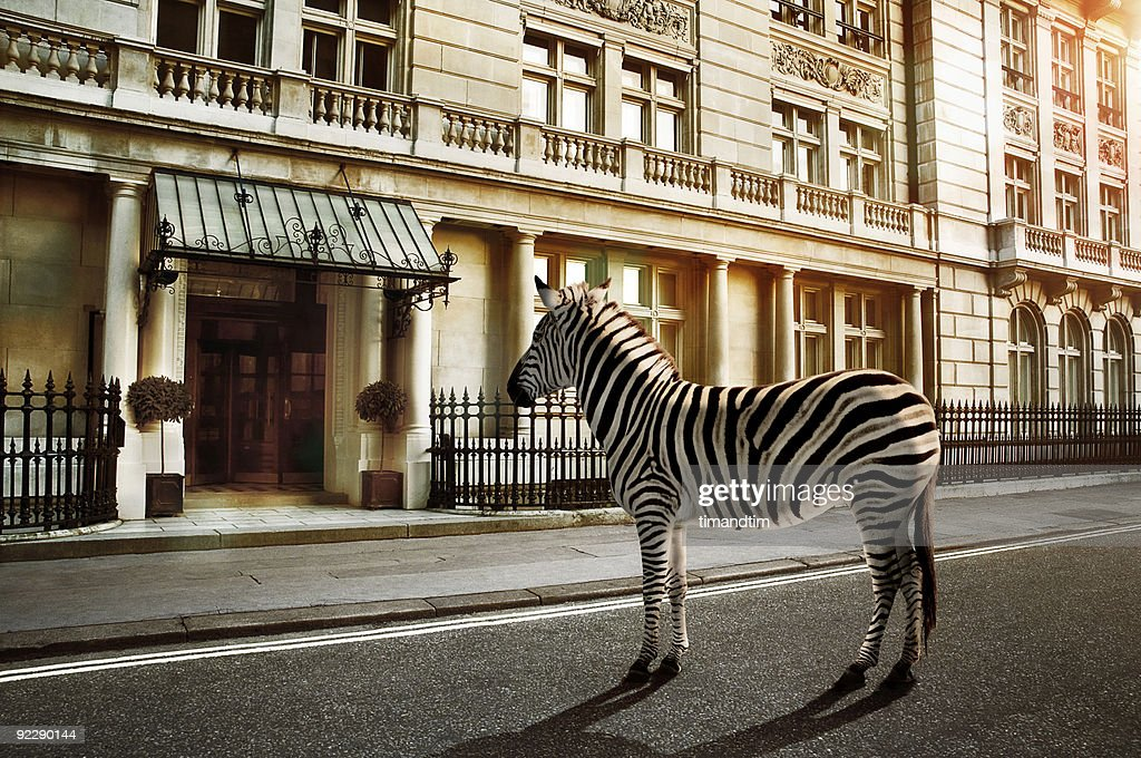 zebra crossing on the road : Stock Photo