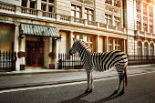 zebra crossing on the road