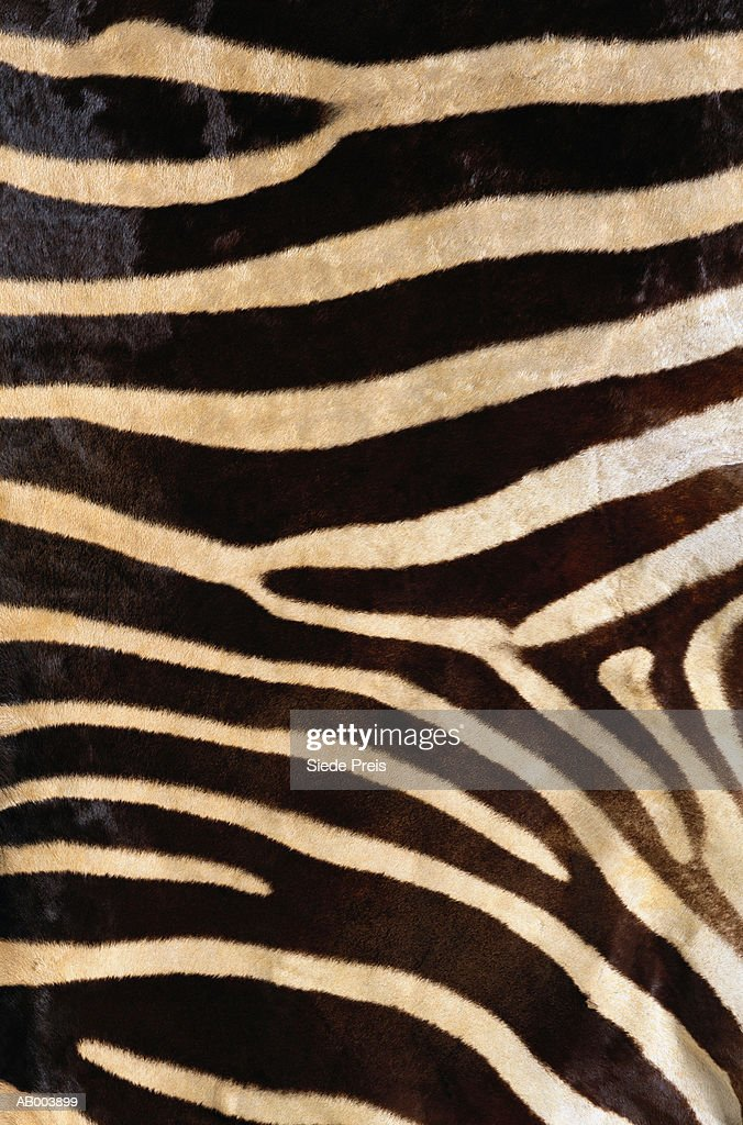 Zebra Hide : Stock Photo