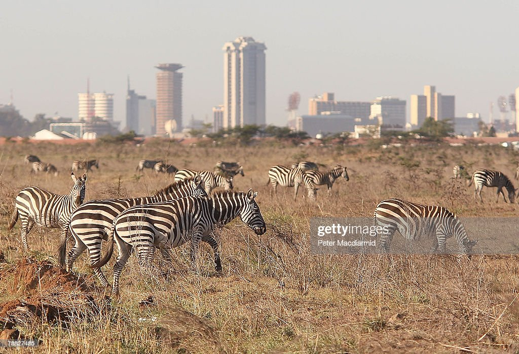 Zebra roam free in front of the Nairobi skyline at the Nairobi National Park on January 8, 2008 in Kenya. Tourism is a $1 billion industry in Kenya. Some tour operators have temporarily banned package holidays over fear of post election violence.