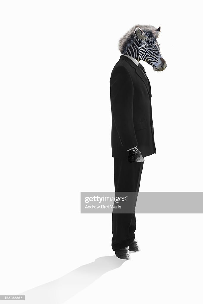 Zebra stands dressed as businessman : Stock Photo