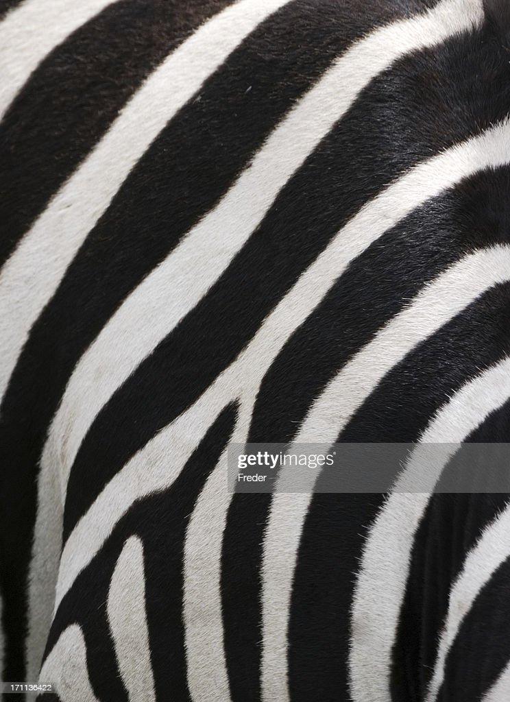 Zebra Without Stripes Zebra Stripes Stock Ph...
