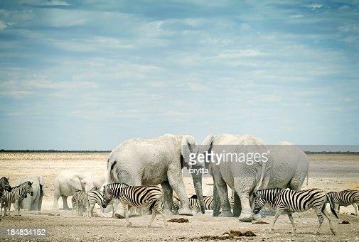 Zebras and African elephants in Etosha National Park, Namibia