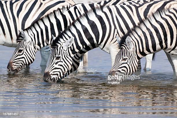 Zebras 飲料は、ウォーターホール、エトーシャ国立公園、ナンビア