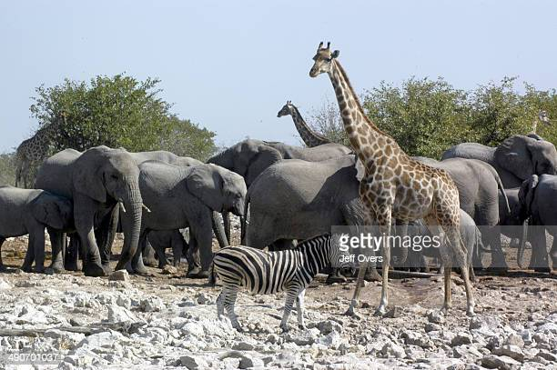 Waterhole Stock Photos And Pictures