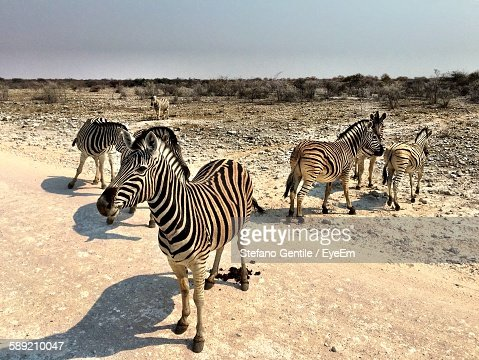Zebras On Country Road Against Sky