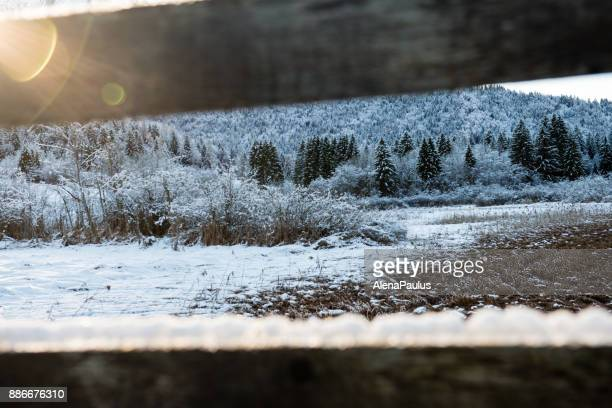 Zelenci pont de Close up en hiver