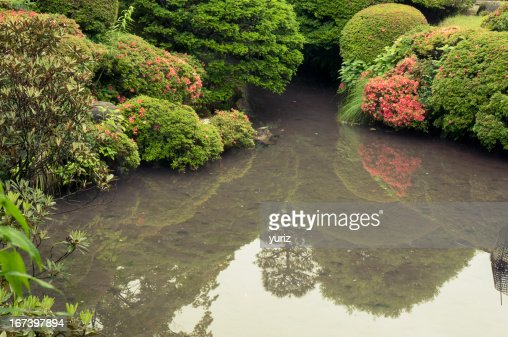 zen pond by summer : Stock Photo