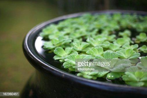 Zen water garden : Stock Photo