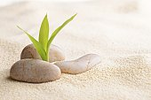 stones and bamboo sprout on the sand