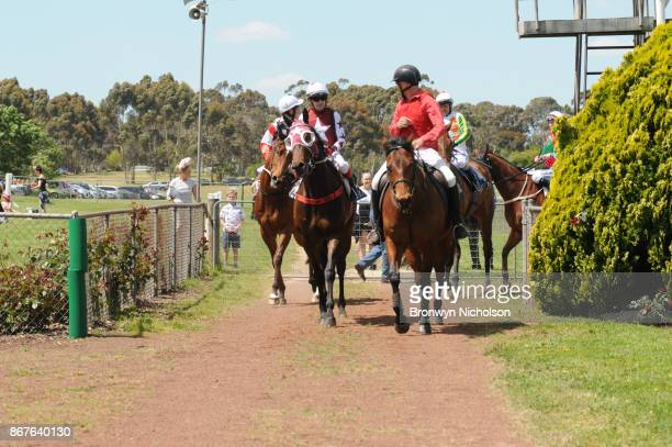 Zepherine ridden by Dean Yendall returns after the Patrick Of Coonawarra Maiden Plate at Hamilton Racecourse on October 29 2017 in Hamilton Australia