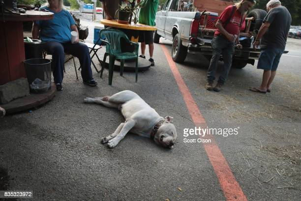 Zeus gets some rest as residents hang out along a line painted through town that represents the anticipated center point of the path of Mondays solar...