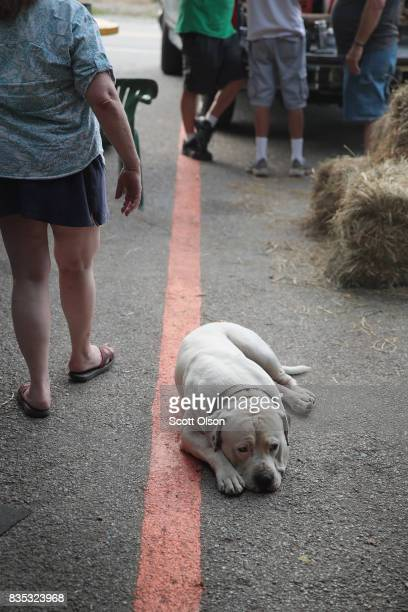 Zeus gets some rest as residents hang out and visitors pass by along a line painted through town that represents the anticipated center point of the...