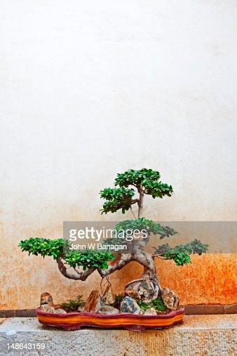 Zhu family garden with bonsai trees. : Stock Photo