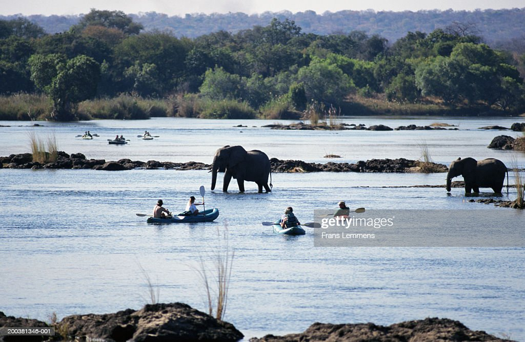 Zimbabwe, tourists in boats watching elephants cross Zambezi River