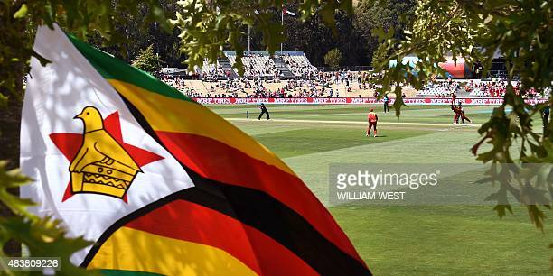 A Zimbabwean flag is attached to a tree during the Pool B 2015 Cricket World Cup match between the UAE and Zimbabwe in Nelson on February 19 2015 AFP...