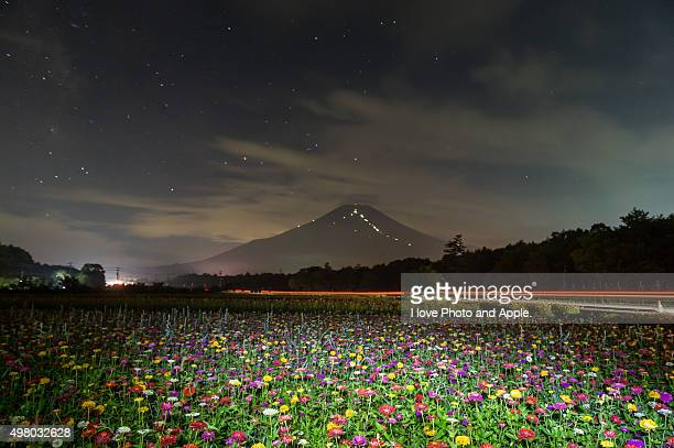 Zinnias and Mt. Fuji night