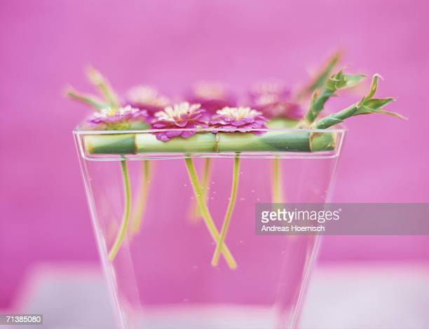 Zinnias and sprouting bamboo in vase, close-up