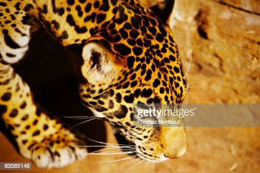 zoo animals : Bildbanksbilder