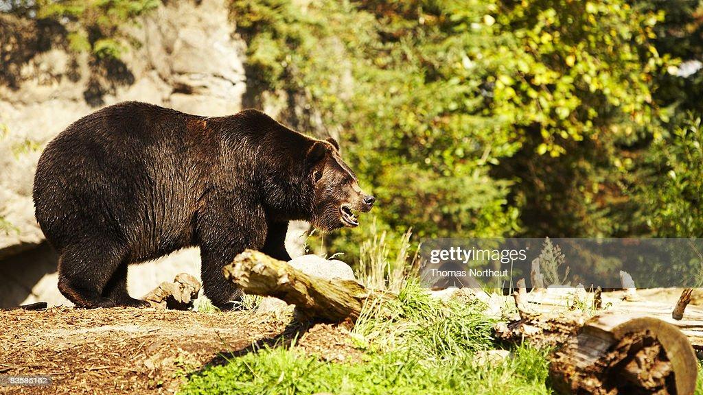 zoo animals : Stock Photo